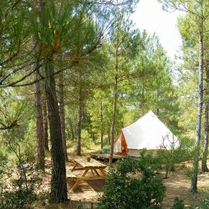 Campamento Forest Days